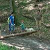Steinweitwerfen - eine ritterliche Disziplin
