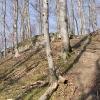 Ringmauer, aus dem Burggraben gesehen.