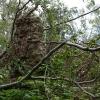 Sturmschäden an der romanischen Rundturmruine.